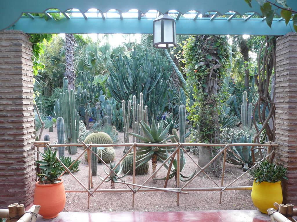 Plantes jardin Majorelle